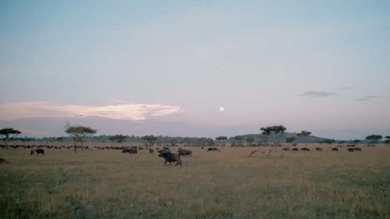 A Behind The Scenes Look at Filming Wildlife